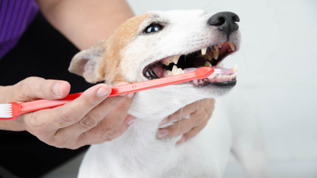 pet dental hygiene tips from scappoose vet hospital in scappoose or